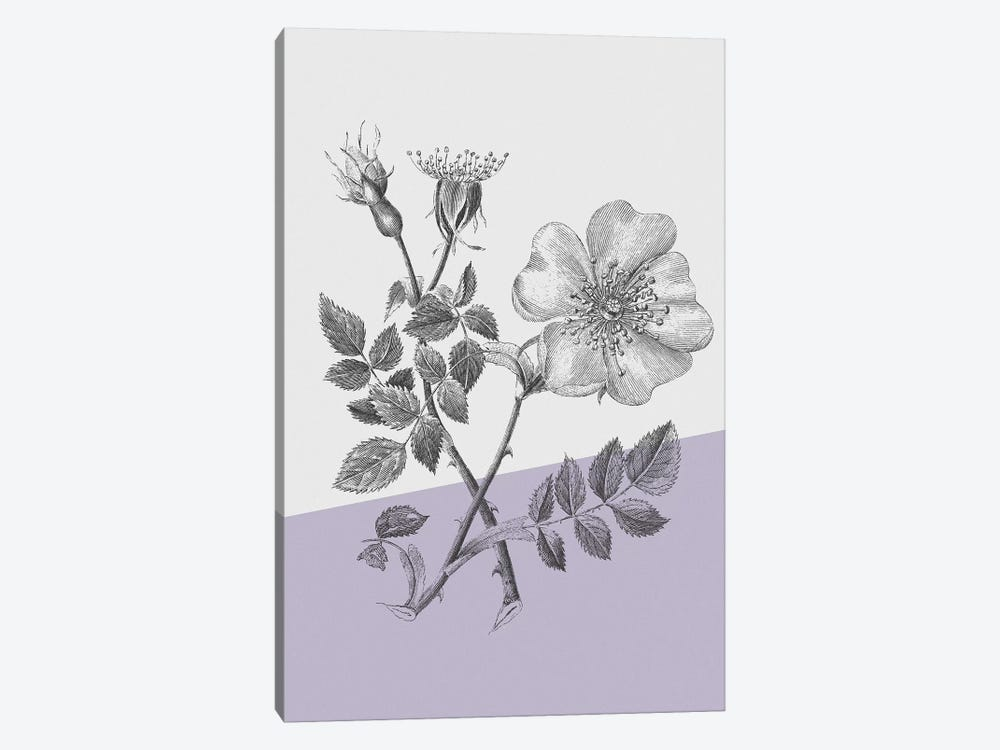 Conversations On Botany IV Color Block by Wild Apple Portfolio 1-piece Canvas Print
