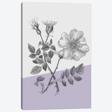 Conversations On Botany IV Color Block Canvas Print #WAC9039} by Wild Apple Portfolio Canvas Art Print