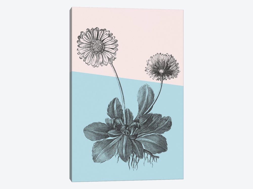 Conversations On Botany IX Color Block by Wild Apple Portfolio 1-piece Canvas Art Print
