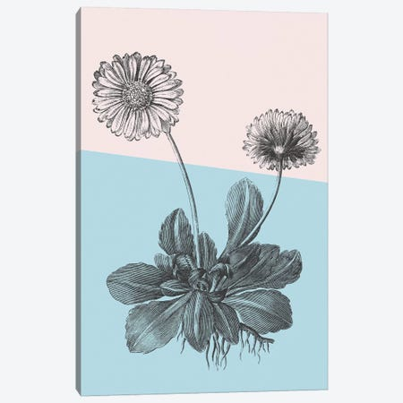 Conversations On Botany IX Color Block Canvas Print #WAC9040} by Wild Apple Portfolio Canvas Wall Art