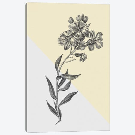 Conversations On Botany VI Color Block Canvas Print #WAC9041} by Wild Apple Portfolio Canvas Wall Art