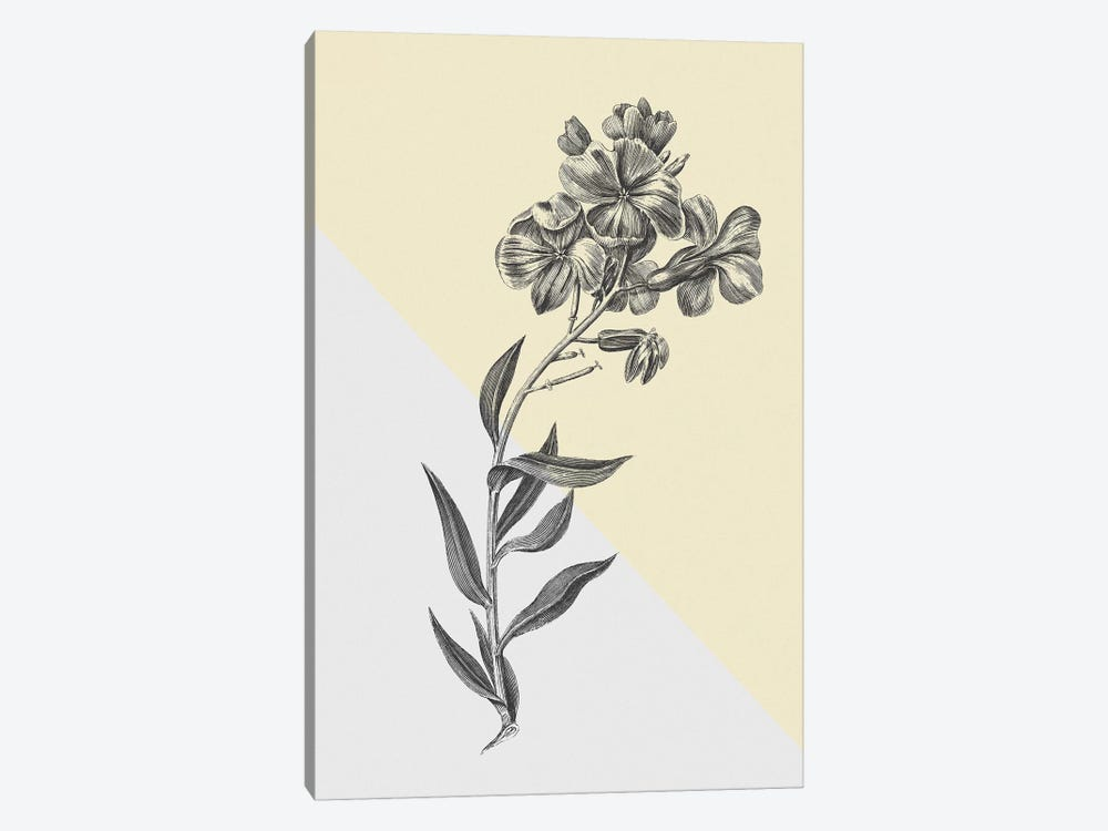 Conversations On Botany VI Color Block by Wild Apple Portfolio 1-piece Canvas Wall Art