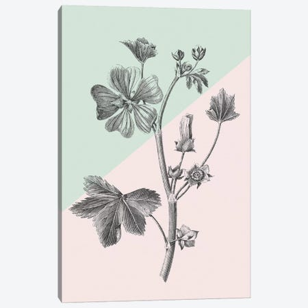 Conversations On Botany VII Color Block Canvas Print #WAC9042} by Wild Apple Portfolio Canvas Art