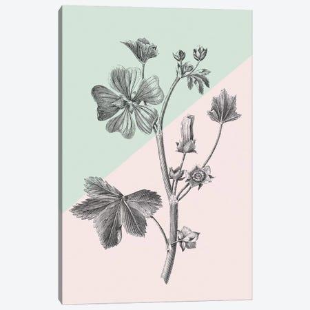 Conversations On Botany VII Color Block Canvas Print #WAC9042} by Wild Apple Portfolio Canvas Art