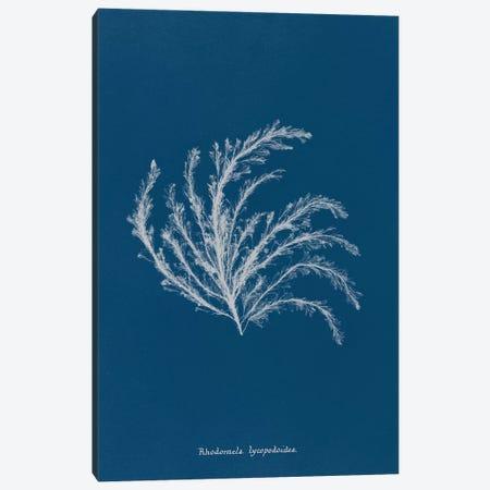 Delicate Coral II Canvas Print #WAC9044} by Wild Apple Portfolio Canvas Art Print