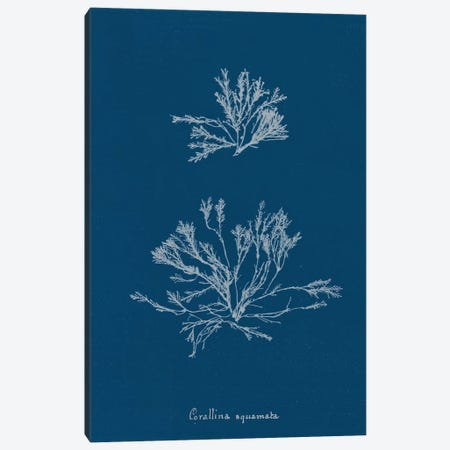 Delicate Coral IV Canvas Print #WAC9046} by Wild Apple Portfolio Canvas Print