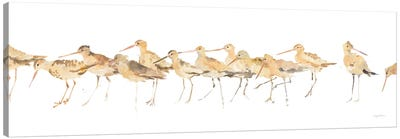 Watercolor Sandpipers Canvas Art Print