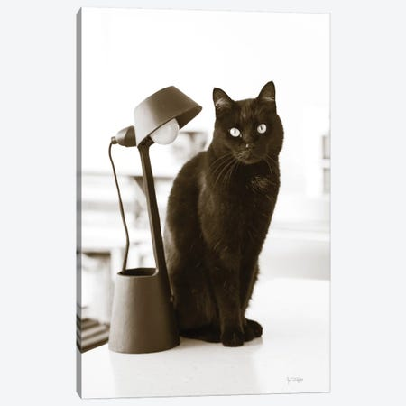 Lights Cat Action 3-Piece Canvas #WAC9245} by Jim Dratfield Canvas Art Print