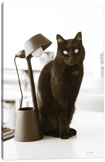 Lights Cat Action Canvas Art Print