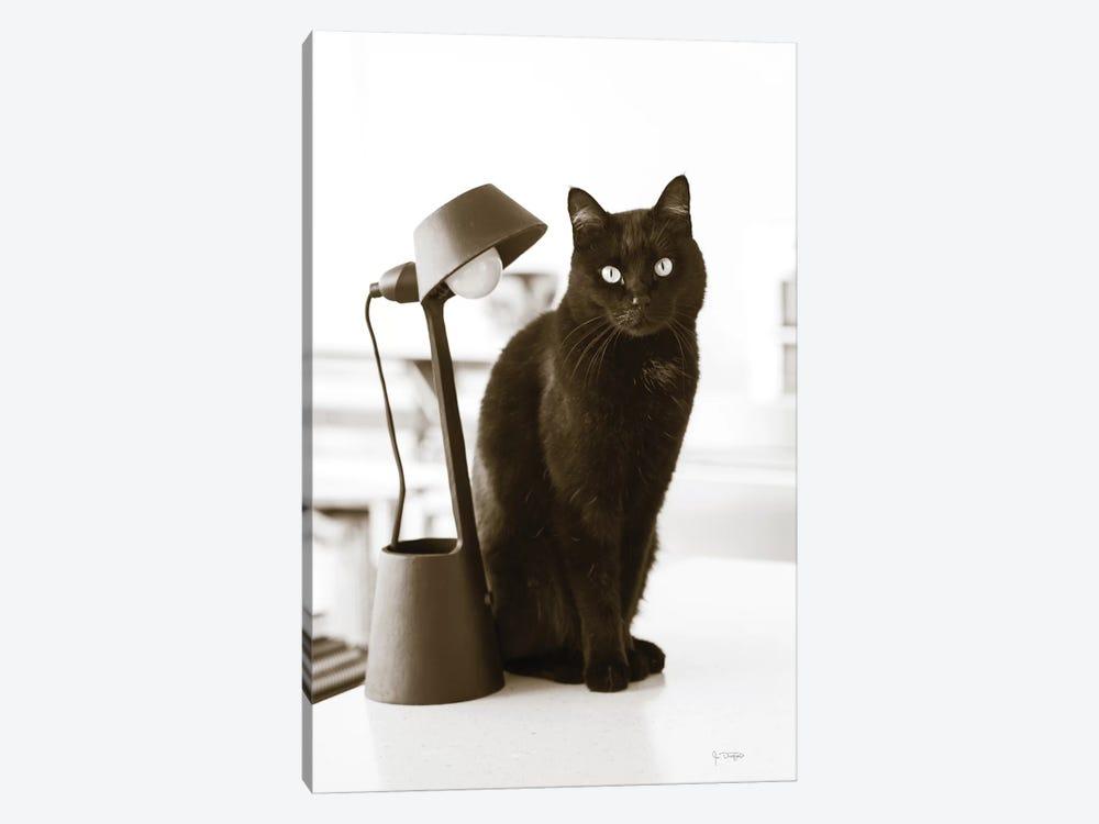 Lights Cat Action by Jim Dratfield 1-piece Art Print