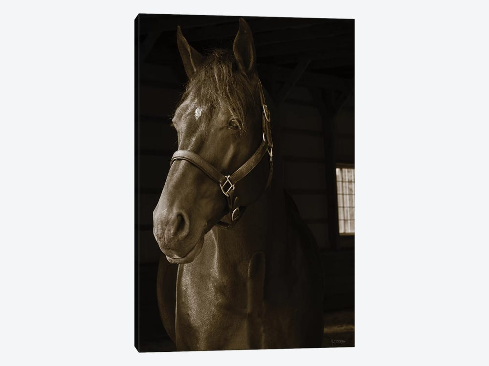 Out Of The Shadows by Jim Dratfield 1-piece Canvas Art