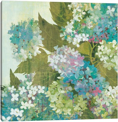 Grandiflora Bloom Canvas Art Print