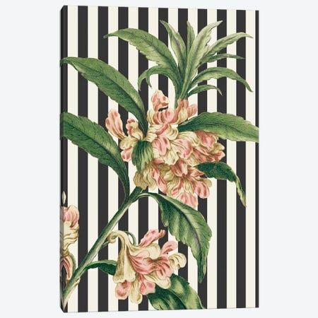 Herbal Botanical XXVI Bold Canvas Print #WAC9396} by Wild Apple Portfolio Art Print