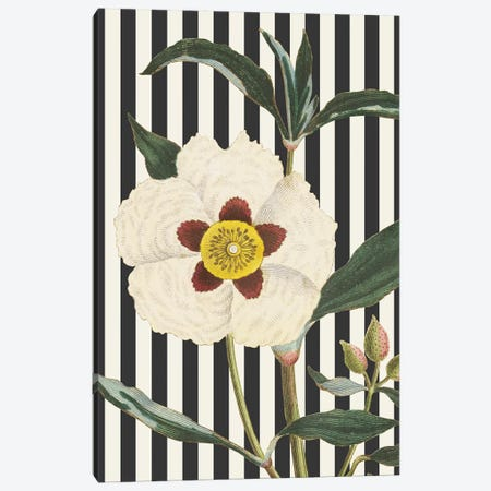 Herbal Botanical XXVII Bold Canvas Print #WAC9397} by Wild Apple Portfolio Canvas Art Print