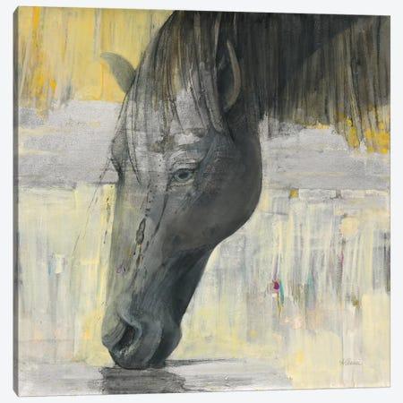 Caleb Canvas Print #WAC9433} by Albena Hristova Canvas Art Print