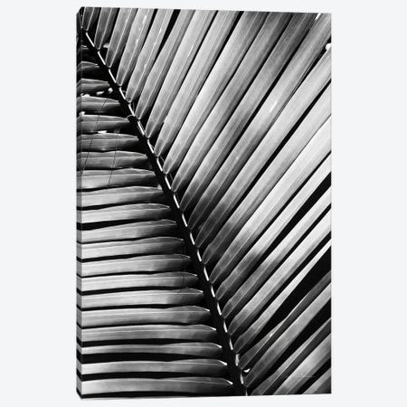Palm Frond I 3-Piece Canvas #WAC9443} by Debra Van Swearingen Canvas Wall Art