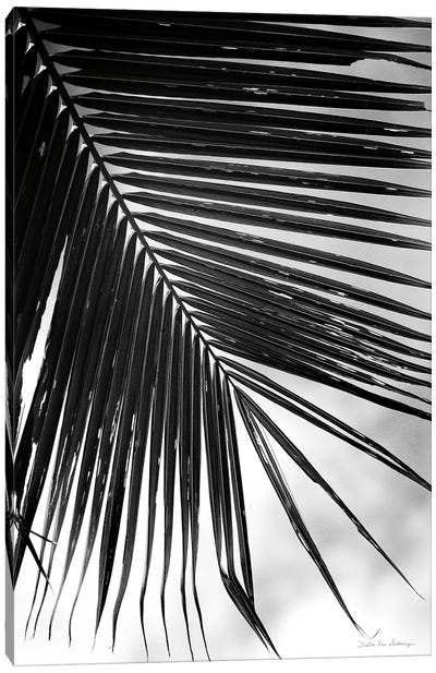 Palm Frond II Canvas Art Print