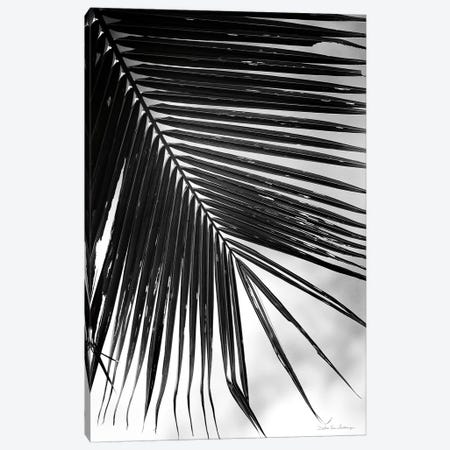 Palm Frond II 3-Piece Canvas #WAC9444} by Debra Van Swearingen Canvas Art Print