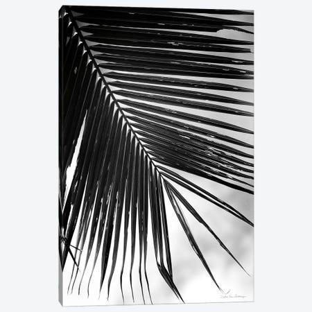 Palm Frond II Canvas Print #WAC9444} by Debra Van Swearingen Canvas Art Print