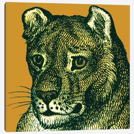 Jungle Flair IV Canvas Print #WAC9574} by Wild Apple Portfolio Canvas Print