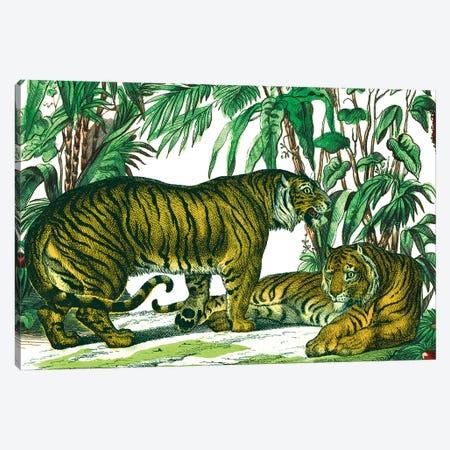 Jungle Flair V Canvas Print #WAC9575} by Wild Apple Portfolio Canvas Print