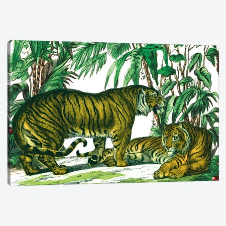 Jungle Flair V Canvas Print #WAC9575} by Wild Apple Portfolio Canvas Print