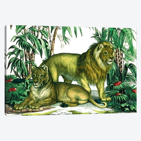 Jungle Flair VI Canvas Print #WAC9576} by Wild Apple Portfolio Canvas Print