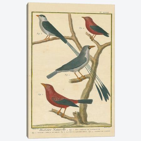 Bird Drawing III Crop Canvas Print #WAC9592} by Wild Apple Portfolio Canvas Artwork