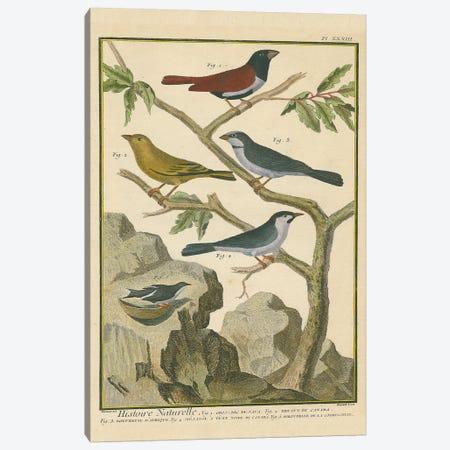 Bird Drawing IV Crop Canvas Print #WAC9593} by Wild Apple Portfolio Canvas Wall Art