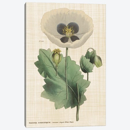 Herbal Botanical XVI Canvas Print #WAC9595} by Wild Apple Portfolio Art Print