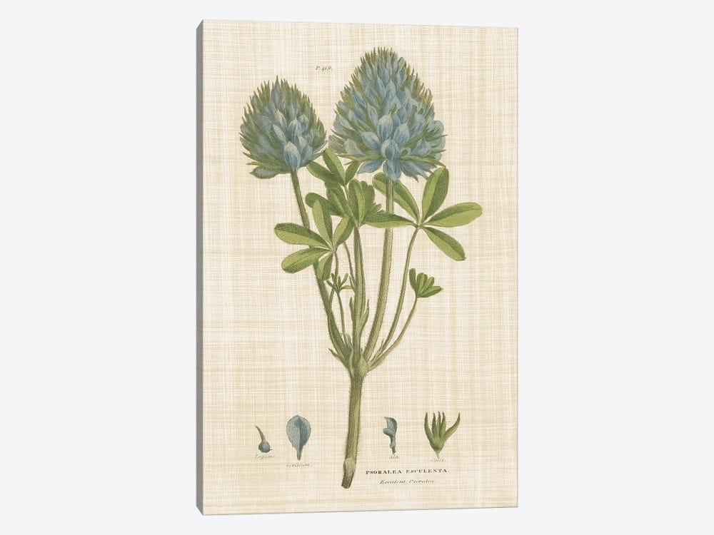 Herbal Botany XV Linen by Wild Apple Portfolio 1-piece Canvas Art