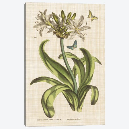 Herbal Botany XX Butterfly Linen Canvas Print #WAC9597} by Wild Apple Portfolio Art Print