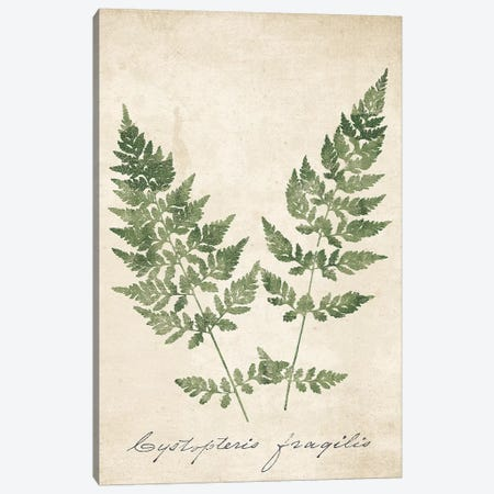 Vintage Ferns VII no Border Crop 3-Piece Canvas #WAC9605} by Wild Apple Portfolio Canvas Art Print
