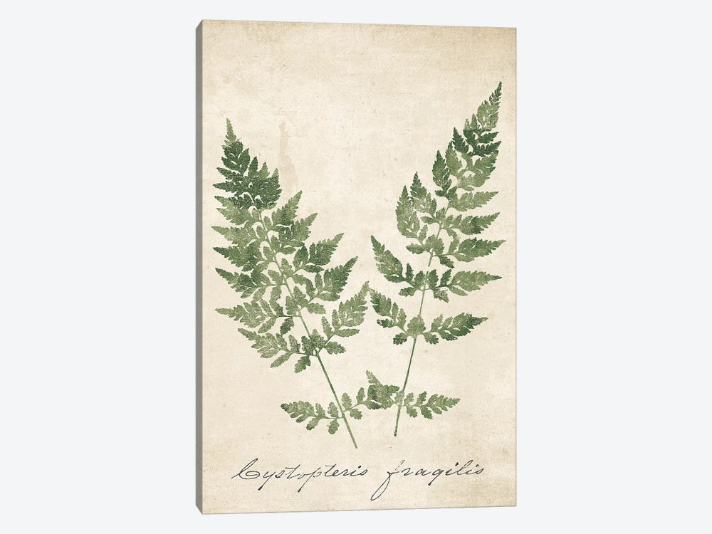 Vintage Ferns VII no Border Crop by Wild Apple Portfolio 1-piece Canvas Wall Art