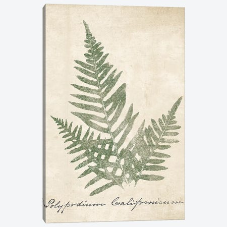 Vintage Ferns XI no Border Crop 3-Piece Canvas #WAC9606} by Wild Apple Portfolio Canvas Art Print