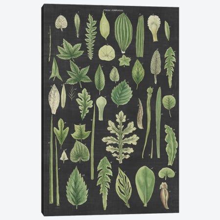 Assortment of Leaves II Charcoal Canvas Print #WAC9658} by Wild Apple Portfolio Art Print