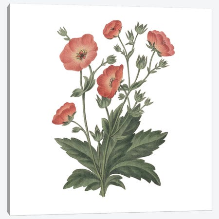 Monument Etching Tile Flowers V Canvas Print #WAC9666} by Wild Apple Portfolio Canvas Print