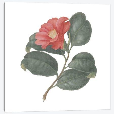 Monument Etching Tile Flowers VII Canvas Print #WAC9667} by Wild Apple Portfolio Canvas Print