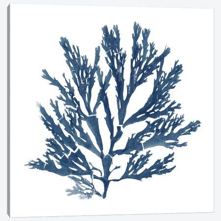 Pacific Sea Mosses Blue on White I Canvas Print #WAC9668} by Wild Apple Portfolio Canvas Wall Art