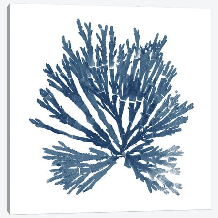 Pacific Sea Mosses Blue on White II Canvas Print #WAC9669} by Wild Apple Portfolio Canvas Wall Art