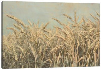 Gold Harvest Canvas Art Print