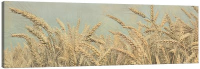 Gold Harvest Pano Canvas Art Print