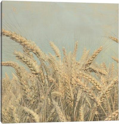 Gold Harvest Square Canvas Art Print