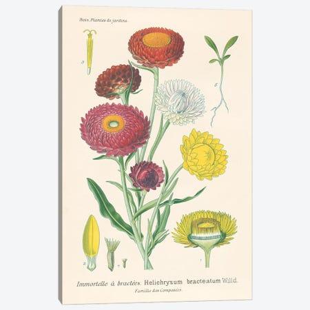 Antique Botanical XL Light Canvas Print #WAC9686} by Wild Apple Portfolio Canvas Print