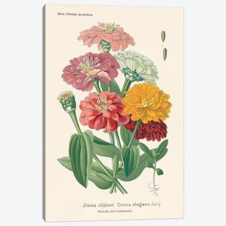 Antique Botanical XLI Light Canvas Print #WAC9687} by Wild Apple Portfolio Art Print