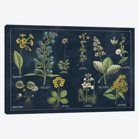 Botanical Floral Chart I Dark Blue Canvas Print #WAC9690} by Wild Apple Portfolio Canvas Art Print