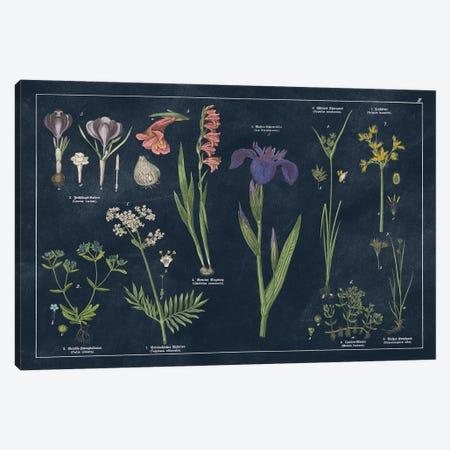 Botanical Floral Chart II Dark Blue Canvas Print #WAC9691} by Wild Apple Portfolio Canvas Print