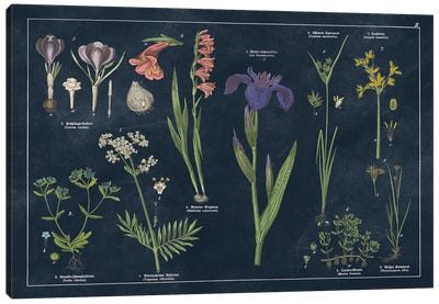 Botanical Floral Chart II Dark Blue Canvas Art Print
