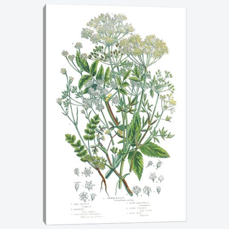 Flowering Plants I Canvas Print #WAC9698} by Wild Apple Portfolio Art Print