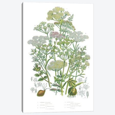 Flowering Plants II Canvas Print #WAC9699} by Wild Apple Portfolio Art Print
